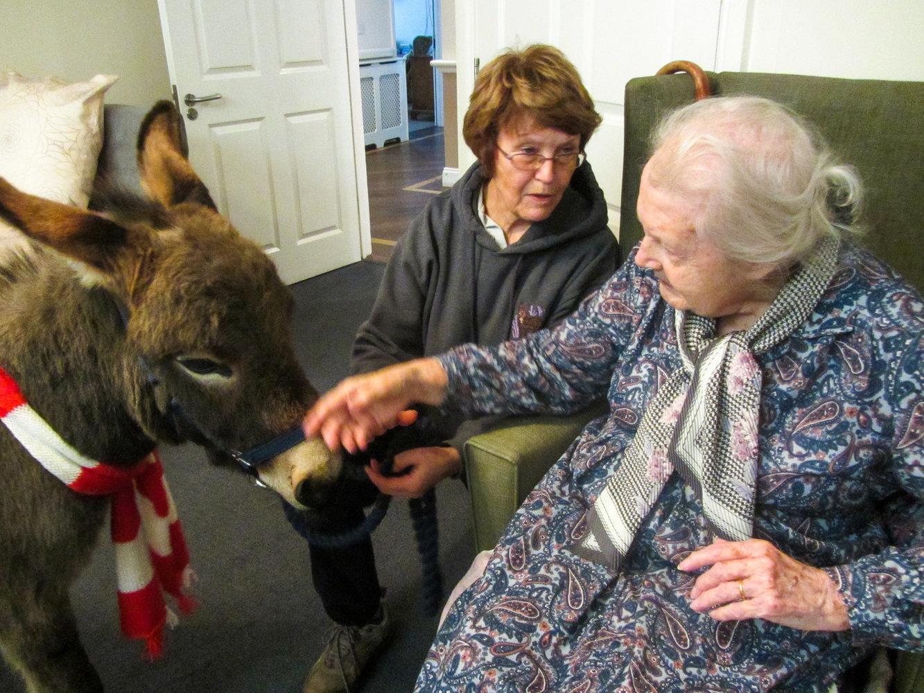 Donkeys visit residents at Windmill House